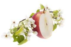 Manzana roja - corte en dos Fotos de archivo