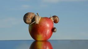Manzana roja en el espejo y caracoles