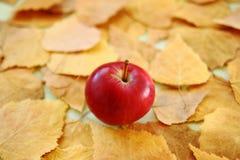 Manzana roja en el fondo del primer seco amarillo de las hojas de otoño Imagenes de archivo