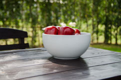 Manzana roja en la taza blanca Imágenes de archivo libres de regalías