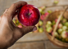 Manzana roja en mano humana Imagenes de archivo