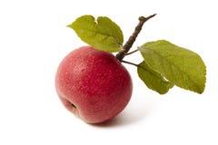 Manzana roja fresca madura con la hoja Foto de archivo