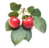 Manzana roja madura con la hoja verde Fotografía de archivo