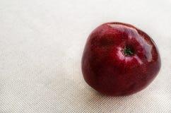 Manzana rojo oscuro madura Foto de archivo libre de regalías