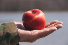 Manzana sólida jugosa joven roja de la fruta bajo luz del sol en un gato viejo para hombre de un hombre mayor, contra fondo un ag fotos de archivo libres de regalías