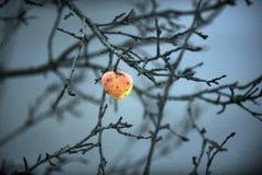 Manzana salvaje Imagenes de archivo