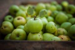 Manzana verde con las hojas en fondo de los appels en caja Imagen de archivo