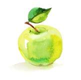 Manzana verde, ejemplo de la acuarela en el fondo blanco Fotografía de archivo libre de regalías