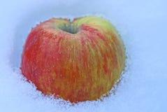 Manzana verde roja grande en la nieve blanca Fotos de archivo libres de regalías
