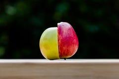 Manzana verde y roja Fotos de archivo