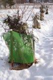 Manzana y cerezos jovenes protegidos en invierno Fotos de archivo