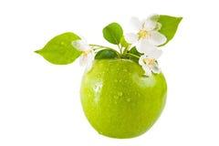 Manzana y flor verdes Fotografía de archivo