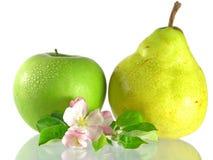 Manzana y pera verdes imagen de archivo libre de regalías