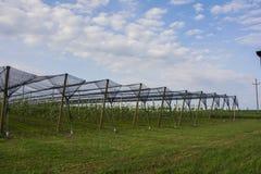 Manzanar con las redes protectoras Fotos de archivo