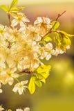 Manzanar de la primavera Fotos de archivo