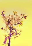 Manzanar de la primavera Imagen de archivo libre de regalías