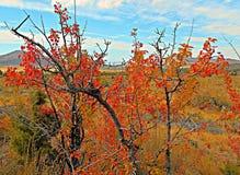 Manzanar del otoño Imagen de archivo libre de regalías