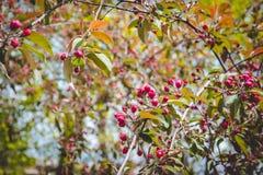 Manzanar floreciente Foto de archivo