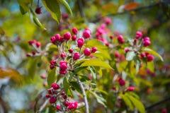 Manzanar floreciente colorido Foto de archivo libre de regalías