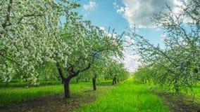 Manzanar floreciente, time lapse panorámico metrajes