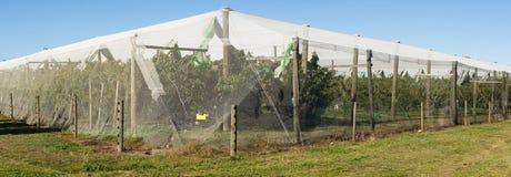 Manzanar protegido por la red del pájaro imágenes de archivo libres de regalías