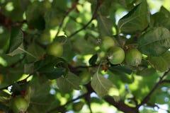Manzanares Fotos de archivo libres de regalías