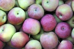 manzanas Fotos de archivo