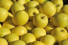 Manzanas amarillas Imagen de archivo