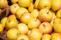 Manzanas amarillas frescas en un mercado agrícola del aire abierto del granjero, comida sana estacional fotos de archivo libres de regalías