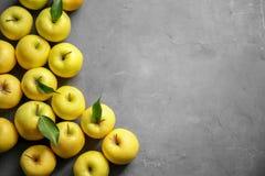 Manzanas amarillas maduras Imagenes de archivo