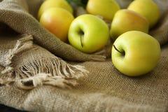 Manzanas amarillas maduras Imagen de archivo libre de regalías