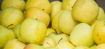 Manzanas amarillas maduras de la fruta Fotografía de archivo