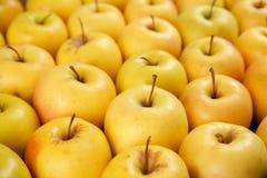 Manzanas amarillas maduras sabrosas Imagen de archivo