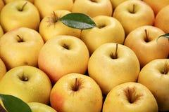 Manzanas amarillas maduras sabrosas Foto de archivo libre de regalías