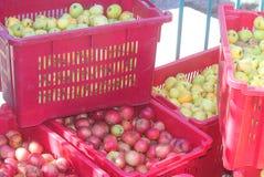Manzanas amarillas y rojas en las cajas Fotos de archivo
