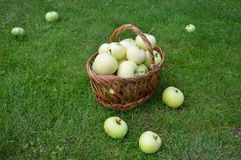Manzanas, cesta, verano, hierba, vitaminas, frutas Imágenes de archivo libres de regalías