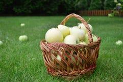 Manzanas, cesta, verano, hierba, vitaminas, frutas Fotografía de archivo libre de regalías