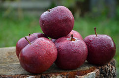 Manzanas con algunas gotas del rocío Imagen de archivo libre de regalías