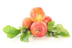 Manzanas con las hojas Fotografía de archivo libre de regalías