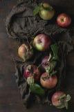 Manzanas con las hojas Imagen de archivo libre de regalías