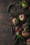 Manzanas con las hojas Foto de archivo libre de regalías