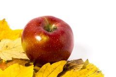 Manzanas con las hojas de otoño Fotografía de archivo