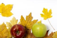 Manzanas con las hojas de otoño Fotos de archivo