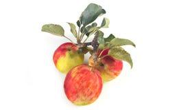 Manzanas con las hojas en un fondo blanco Foto de archivo