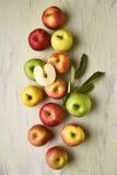 Manzanas con todavía de las hojas vida Foto de archivo libre de regalías