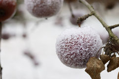 Manzanas cubiertas escarchadas al aire libre Foto de archivo