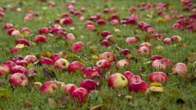 Manzanas de Autums fotografía de archivo