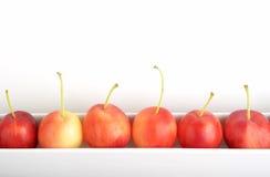 Manzanas de cangrejo Imágenes de archivo libres de regalías