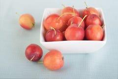 Manzanas de cangrejo Imagenes de archivo