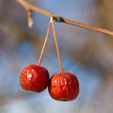 Manzanas de cangrejo rojas imagenes de archivo